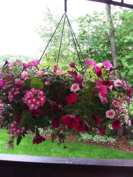 Lowes 50 off hanging flower baskets clearance find living rich lowes 50 off hanging flower baskets mightylinksfo
