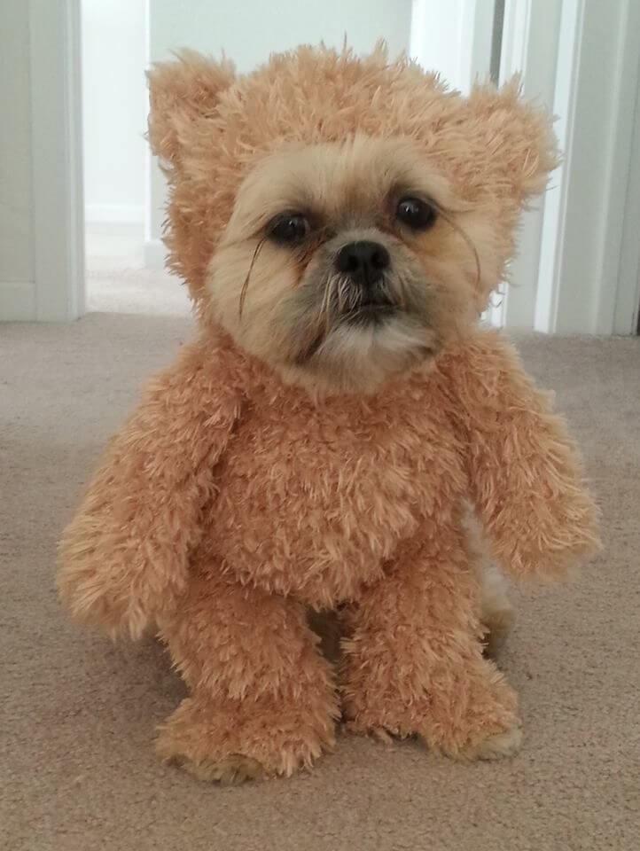 walking teddy bear dog costume 8eb00a50fbbb17c43fb39bc84cbbc600 - How To Make A Dog Halloween Costume