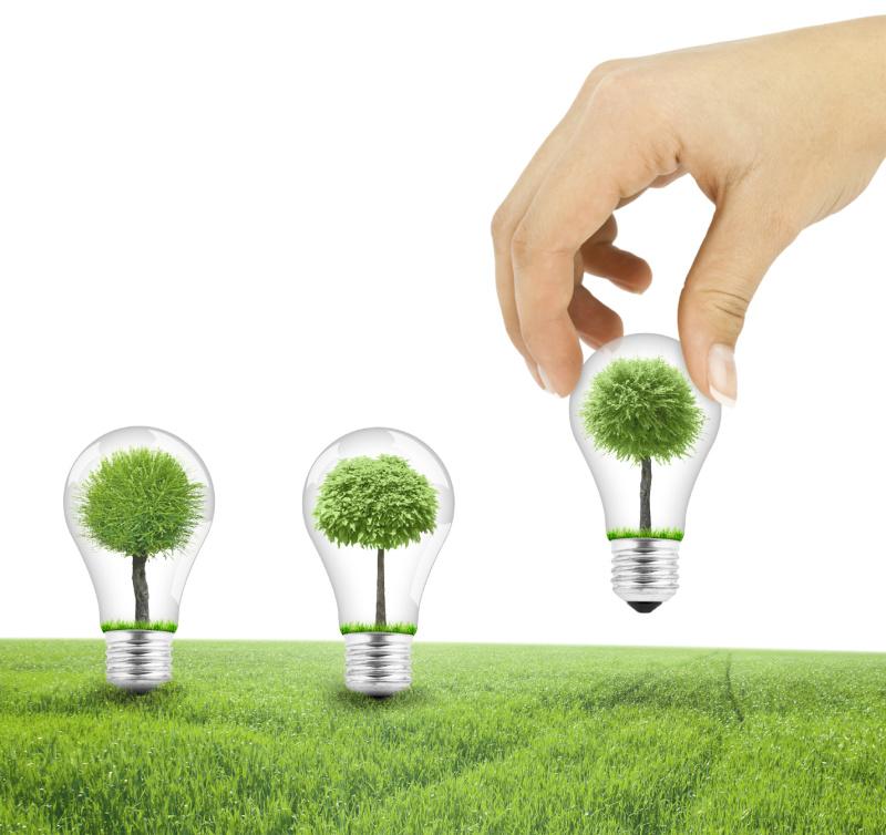 Scene of the hand plant tree in lightbulb on green grass