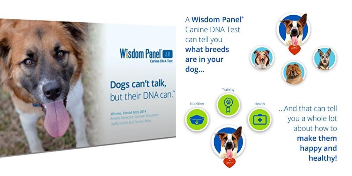 wisdom panel insights coupon