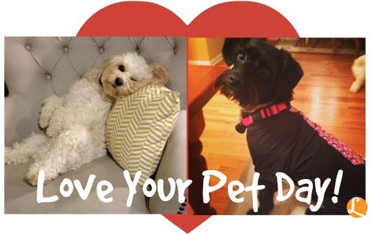 Make use of Love Your Pets coupons to get the best pet caretakers in the market. Love Your Pets offers the best pet caretakers at the lowest price range. They provide pet caretakers with fast shipping and at reasonable prices.